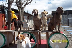 doggy daycare in park city utah