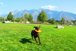 dog park in deer valley