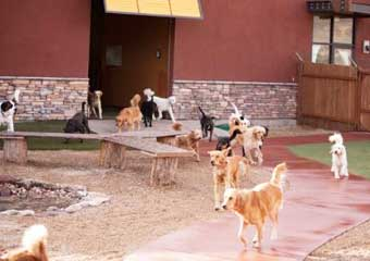 pet day care in park city, utah